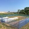 ラボ4畑の超VIPな作物