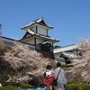 石川門のお花見