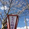 九州の桜とドライブ