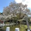 岐阜県観光大使のつれづれ~2020.04.07~