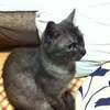 07:猫に「またね!」って言ってもらいたい
