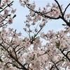 春がテーマの記事でブログをふりかえりました