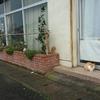 男鹿駅前旅館猫