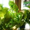 観葉植物と光のある窓辺!