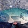 青い海には青い魚