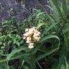 野路の花にも花屋にも秋の雨(あ)