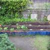 【家庭菜園】バジルが発芽しました