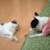 レンタルペットというビジネス ドラマ『ブランケット・キャッツ』の原作もレンタル猫の話