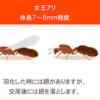 #271 強毒のヒアリ、江東区青海に定着か 国内初の可能性(やや閲覧注意?)