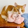 【猫学】前足でこねこねふみふみ…。愛猫のふみふみの理由と気を付けるべきこととは?