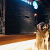 新店舗【スターバックスコーヒー葉山店】は犬と楽しめるか?!
