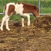 馬のノアが来るときに、僕らの地球からケガレチがなくなる積年の想いが最終章に向かう。
