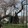 山高神代桜と実相寺の御首題