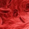 毛細血管の長さ、地球さんの2周半もあります。♫♫♫