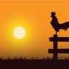 フリーランスが夜型→朝型生活になる方法【やっぱり引っ越しが最強】