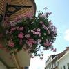 街にあふれる花たち