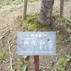 千葉県多古町の道の駅にも川津桜がありました20180307