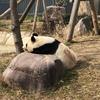 【写真大量】京阪神動物園めぐり~王子動物園~