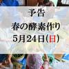 春の酵素作り 5月24日開催します