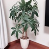 【人工観葉植物】フェイクグリーンのすすめ【水遣り不要】
