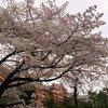 にっき:新年度開始、雨桜、準備