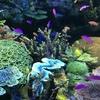 娘とのデートで池袋のサンシャイン水族館へ。コンパクトだけどすごくきれいで素敵