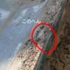 瓦の隙間の埃を掃除して、雨漏りを止める件。
