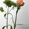 ところで、撫子(なでしこ)ってどんな花か知ってますか??