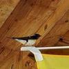スマホのカメラで撮る野鳥