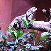 爬虫類だけの動物園【iZoo(イズー)】