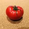 茨城県NKKアグリドームのフルーツトマトは日常の贅沢に使いたいトマト