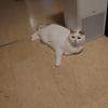 【64本目】猫様は涼しい場所を知っている