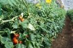 家庭菜園・市民農園の初心者のあなたが野菜作りが楽しくなる農園を選ぶときの6つのポイント!