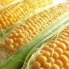 遺伝子組換え表示制度問題から透けて見える農業政策などの課題(1/2)