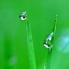 雨が降ると思い出す、韓国で雨の日はチヂミとマッコリ