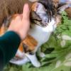 【愛猫日記】毎日アンヌさん#177