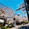 横浜山手の汐汲坂(しおくみざか)の桜2019