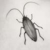 【坂田麻季江】ゴキブリのことを考えた