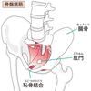 骨盤底筋体操と尿漏れ:変形性股関節症にも関係が!?動画あり