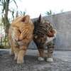 3月後半の #ねこ #cat #猫 その2