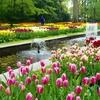 チューリップ畑の絶景がそこに!春はオランダ・キューケンホフ公園へ行こう(2017年版行き方、期間、料金など)