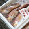 2020年9月10日 小浜漁港 お魚情報