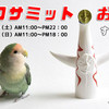 20日21日は「インコサミット大阪」です!!