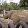 よこはまズーラシア動物園は動物園としては致命的