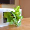 無印良品「壁にかけられる植物」でキッチンにもグリーンが置ける!