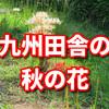 九州の田舎の秋の花