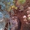 次郎柿の苗、コニファーなどを庭に植える