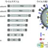 インフルエンザウイルス 〜  構造とワクチン、生活環と治療薬の関係