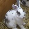 🐇生き物が消えた!🐤学校の飼育小屋で生き物を飼育しなくなったのはなぜ!