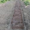 ジャンボ落花生(おおまさり)の畝作り
